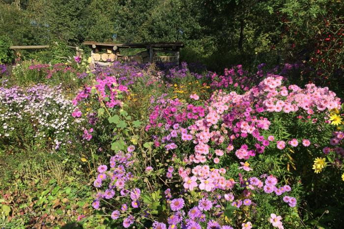 Herbstansicht blühender BUND Lehrgarten Herne